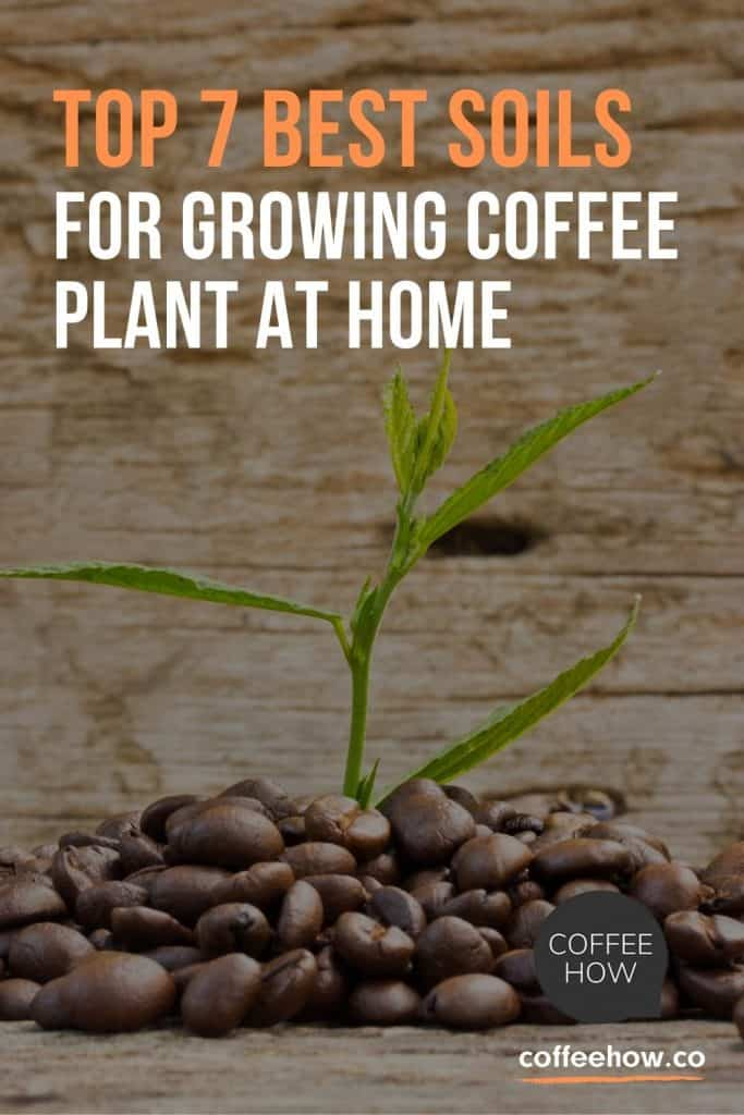 Top 7 Best Soils For Growing Coffee Plant At Home - coffeehow.co