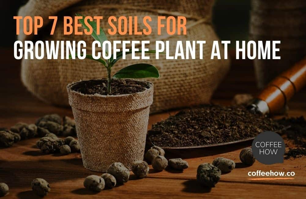 Top 7 Best Soils For Growing Coffee Plant At Home